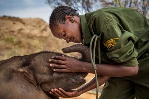 Warriors Who Once Feared Elephants Now Protect Them 1 © Ami Vitale